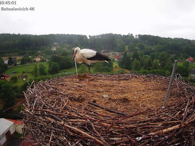 Bohuslavice - Čápi na komíně